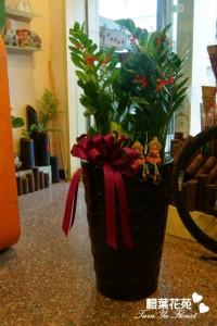 橙葉盆栽12